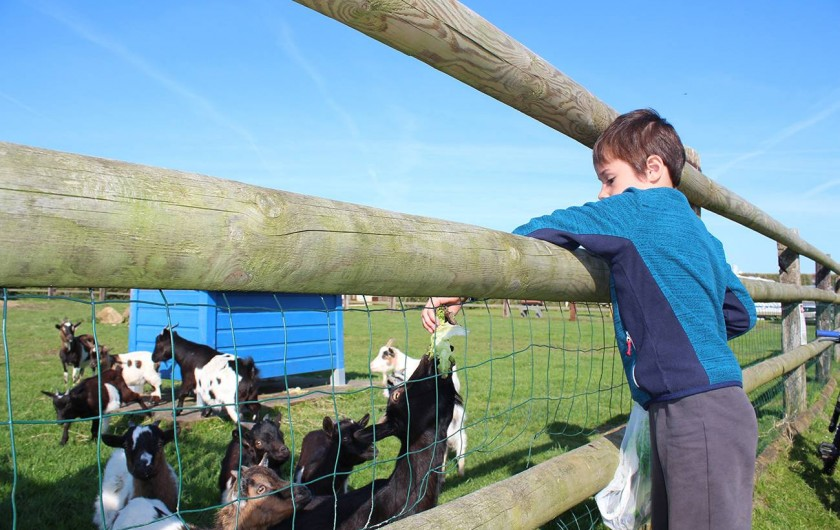 Location de vacances - Bungalow - Mobilhome à Ravenoville Plage - Petites chèvres du parc animalier.