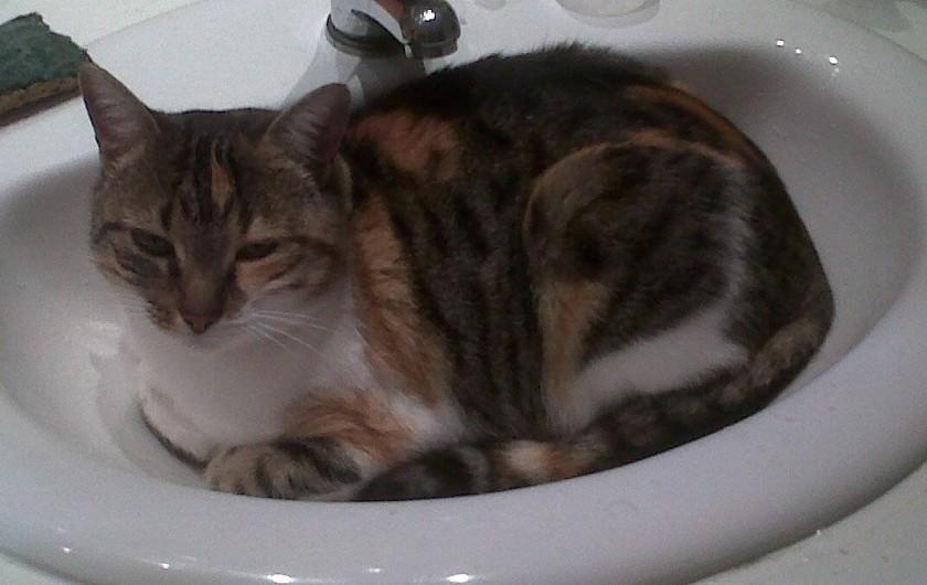 Location de vacances - Chambre d'hôtes à Aubin - Tigrette , la chatte de la maison est très affectueuse