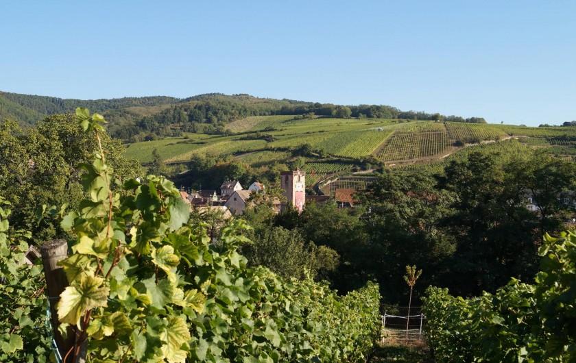 Location de vacances - Gîte à Ribeauville - Au pied de la route des vins d'Alsace : voici Ribeauvillé entouré du vignoble