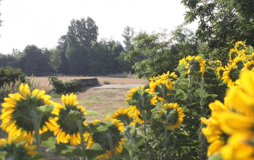 Location de vacances - Gîte à Lafrançaise - Chemin de randonnée au départ de la location.