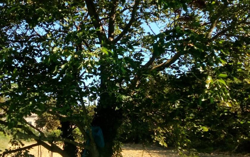 Location de vacances - Gîte à Marsanne - tipi gite lorette scoot nomad location vacances tourisme marsanne