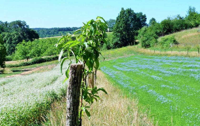 Location de vacances - Chambre d'hôtes à Auriac-du-Périgord - Le lin et le Sarrasin en agroforesterie