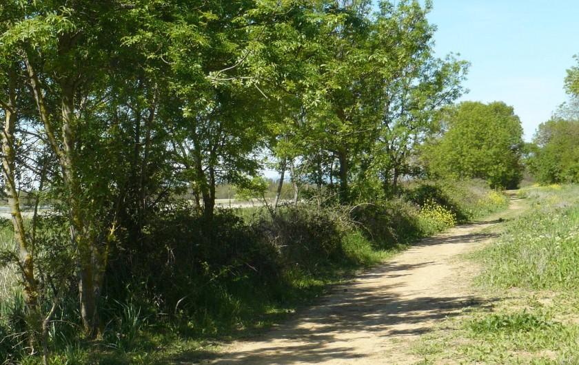 Location de vacances - Chambre d'hôtes à Villeneuve-lès-Béziers - Des sentiers de randonnée