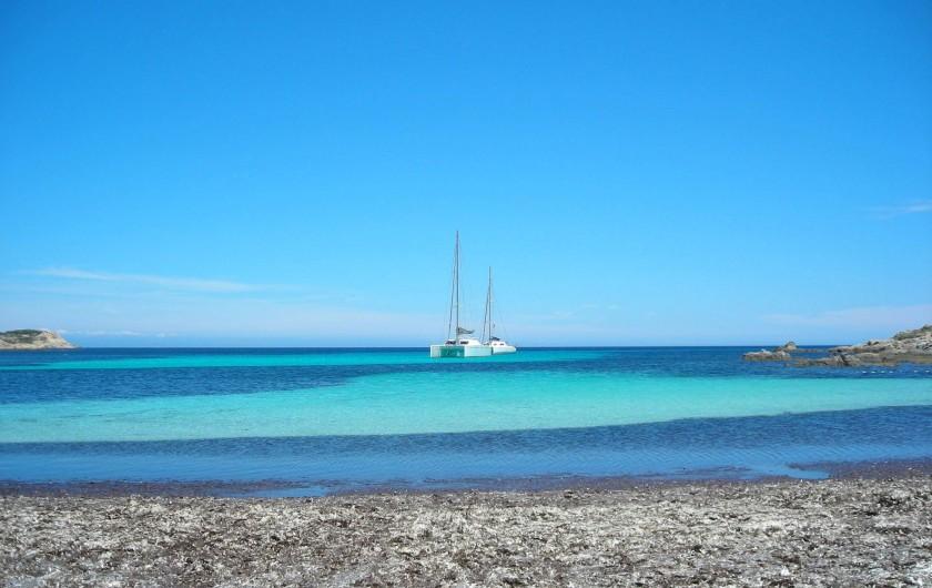 Location de vacances - Villa à Calvi - PLage de l'alga.