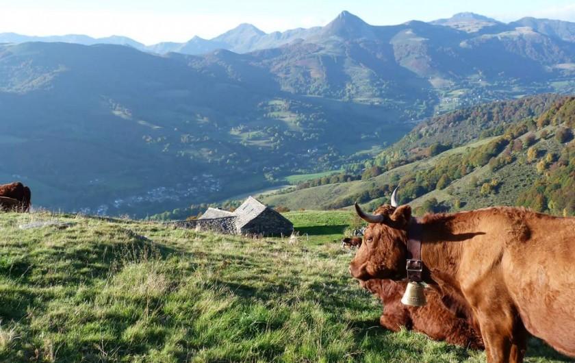 Location de vacances - Villa à Valuéjols - Vue sur le Puy Griou