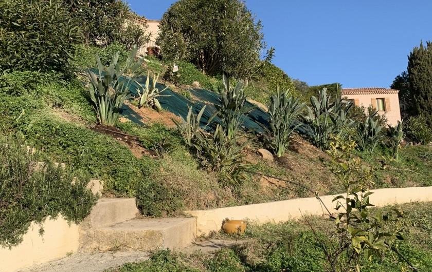 Location de vacances - Villa à Cagnes-sur-Mer - Lower garden
