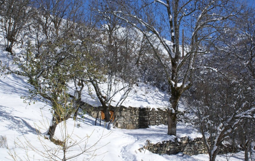 Location de vacances - Chalet à Saint-Paul-sur-Ubaye - espace entourant le chalet (le petit bois )