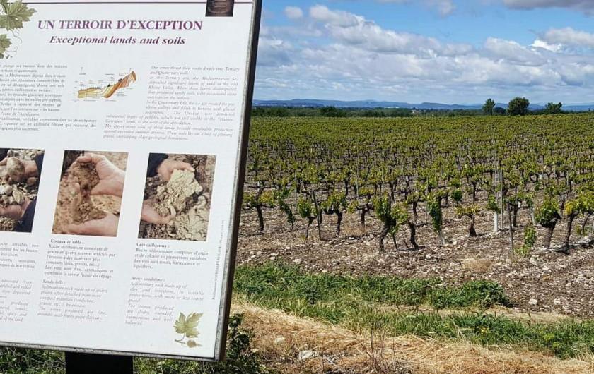 Location de vacances - Gîte à Vacqueyras - Vignobles