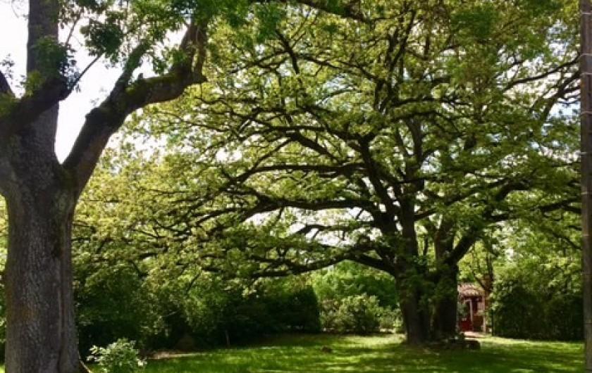 Location de vacances - Maison - Villa à Mirannes - Jardin et arbre centenaire