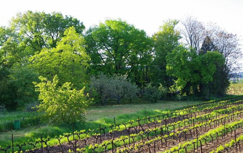 Location de vacances - Gîte à Lirac - Le jardin