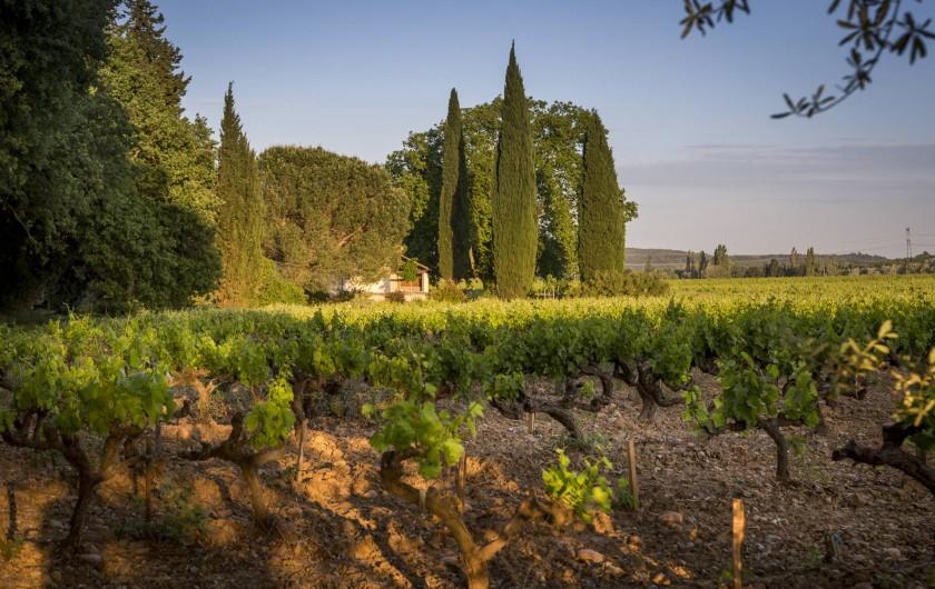 Location de vacances - Gîte à Lirac - Promenade dans les vignes, côté ouest
