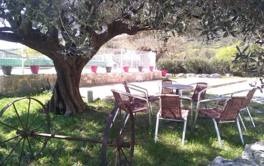Location de vacances - Gîte à Seynes - SALON sous l'olivier centenaire terrain de PÉTANQUE
