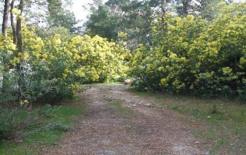 Location de vacances - Bungalow - Mobilhome à Ghisonaccia - Parc