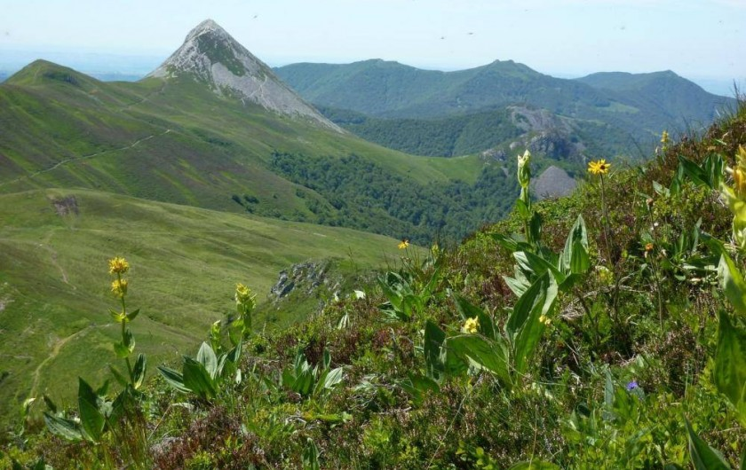 Location de vacances - Studio à Le Lioran - le puy griou et la gentiane
