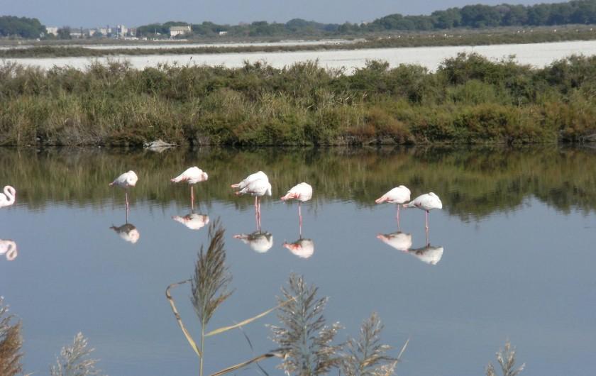 Location de vacances - Appartement à Le Grau-du-Roi - La Camargue, le paradis des Flamands roses