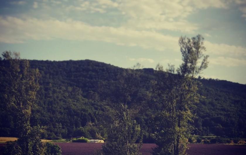 Location de vacances - Maison - Villa à Saint-Martin-de-Brômes - Champs de lavande face à la copropriété
