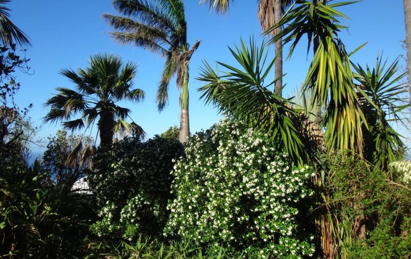 Location de vacances - Villa à Les Avirons - le jardin