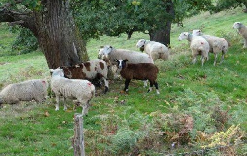 Location de vacances - Maison - Villa à Astugue - Mouton en bordure de la bergerie