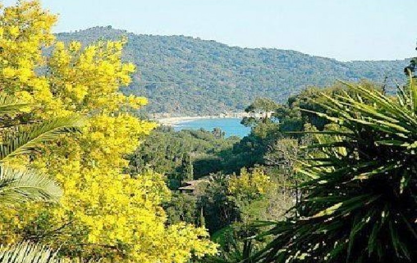 Location de vacances - Mas à La Croix-Valmer - Mimosas
