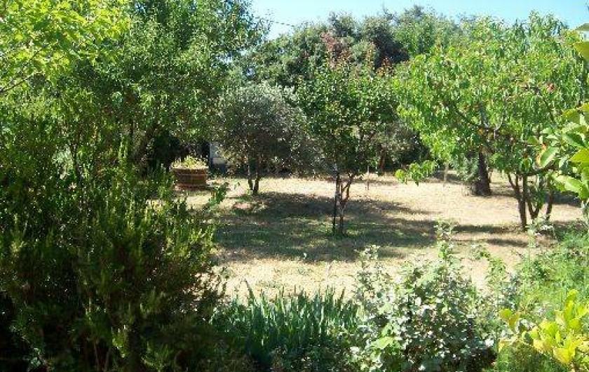 Location de vacances - Villa à La Cadière-d'Azur -  verger, plantes aromatiques.