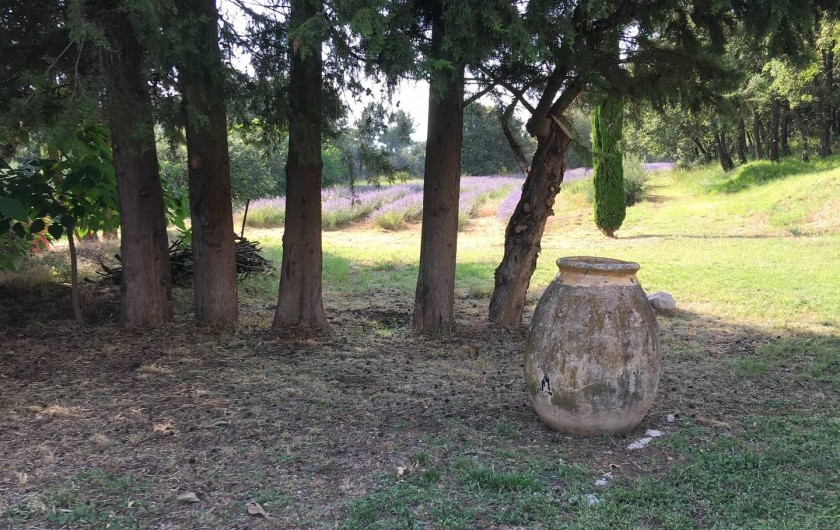 Location de vacances - Appartement à Jouques - Départ de chemin bordé de lavandin, vers la forêt