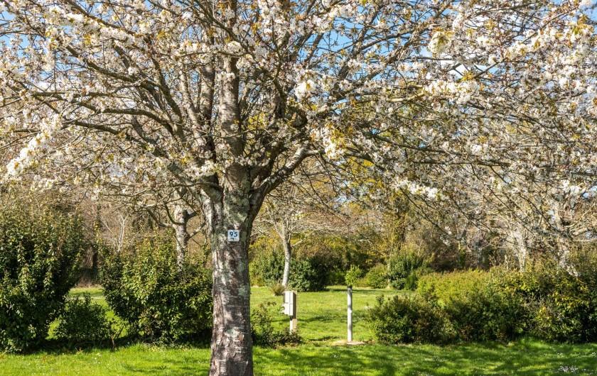 Location de vacances - Camping à Clohars-Carnoët - De grands arbres