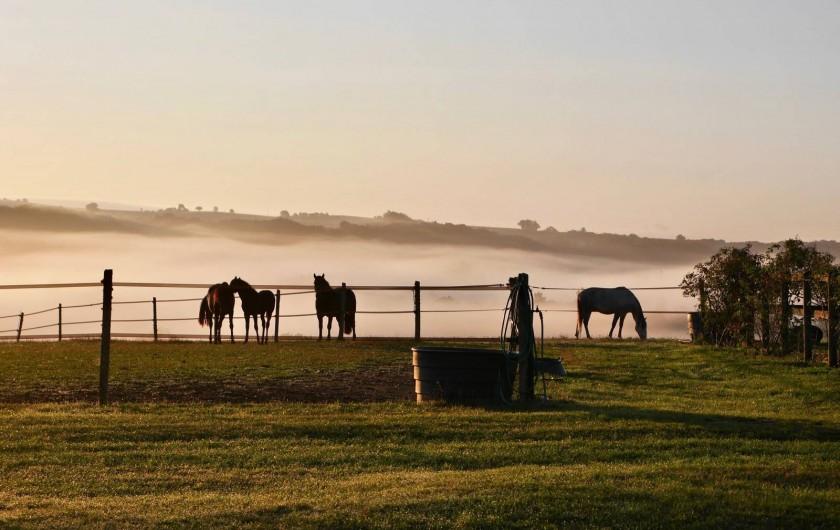 Location de vacances - Maison - Villa à Monfort - Sur la propriété, élevage de chevaux de Pure Race Espagnole