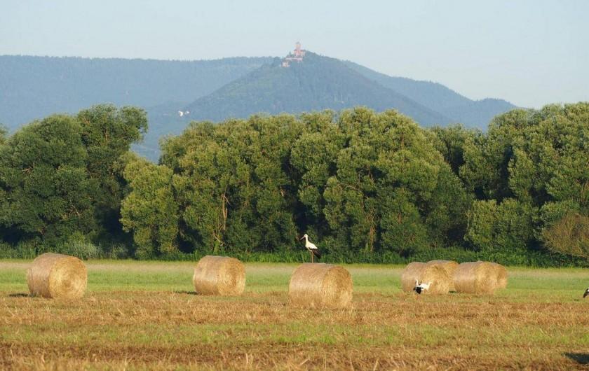 Location de vacances - Gîte à Muttersholtz - La plaine d'Alsace