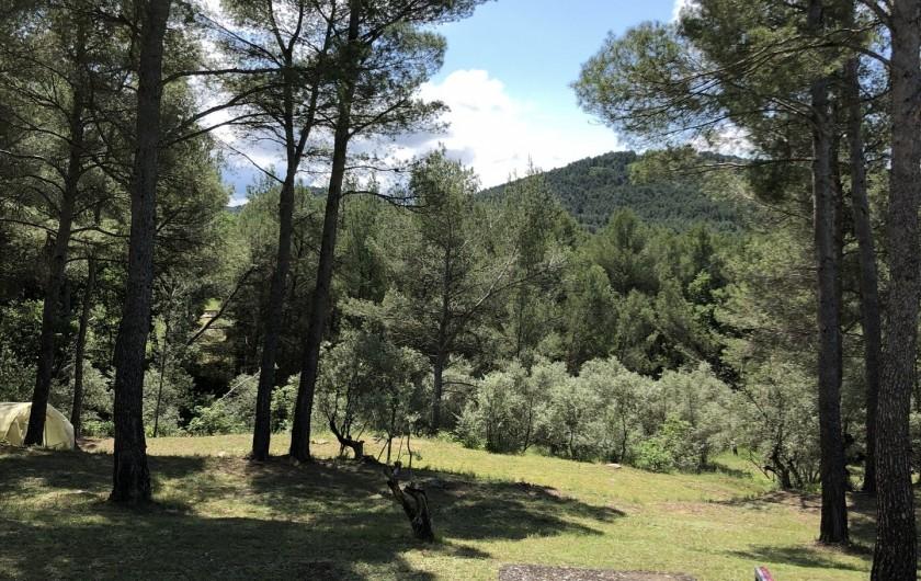 Location de vacances - Gîte à Pernes-les-Fontaines - Vue de la pinède