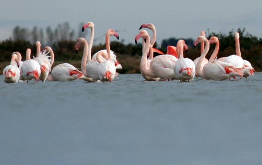 Location de vacances - Appartement à Palavas-les-Flots - Les flamants roses.