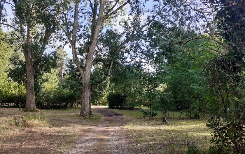 Location de vacances - Bungalow - Mobilhome à Camiers - Ballade dans le camping