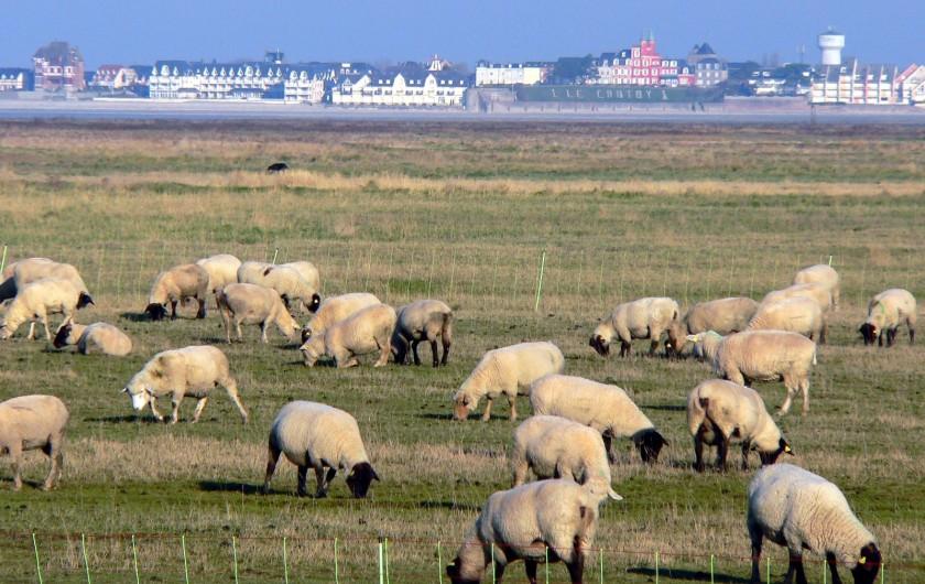 Location de vacances - Gîte à Le Crotoy - Les moutons de pré salés