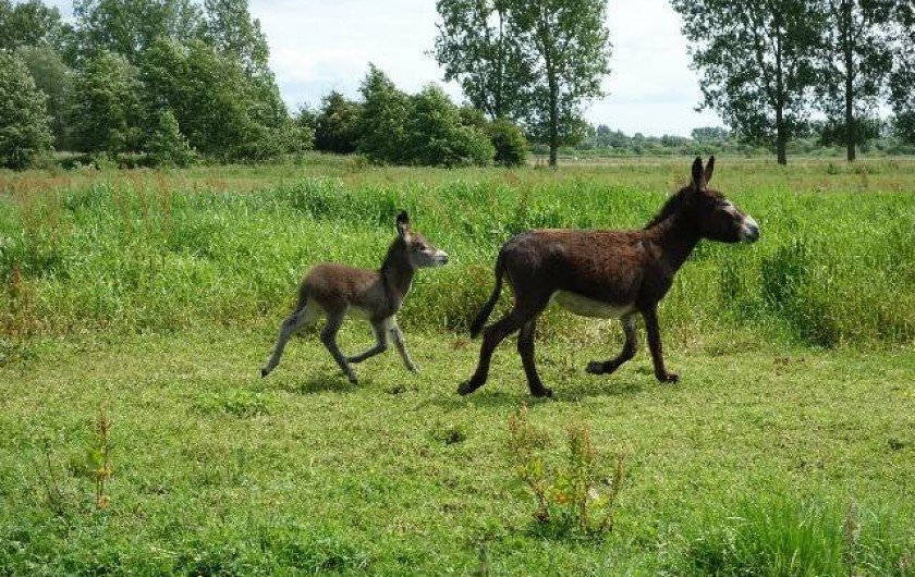 """Location de vacances - Gîte à Berck - Une anesse """"Tinkerbell"""" et son fils """"Diabolo""""."""