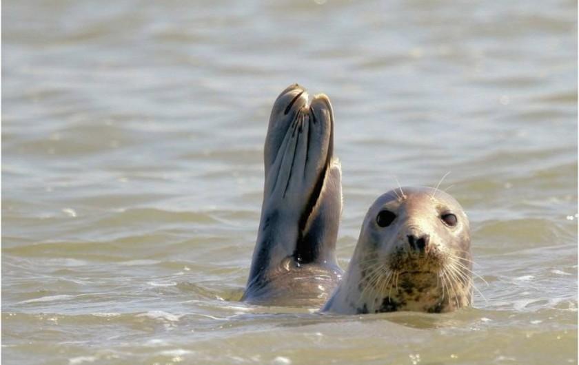 Location de vacances - Gîte à Berck - A 12km - Visible: compagnie d'une centaine de phoques  à 50m de la jetée..!
