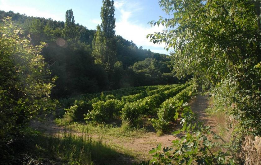 Location de vacances - Maison - Villa à Vinezac - Vignes