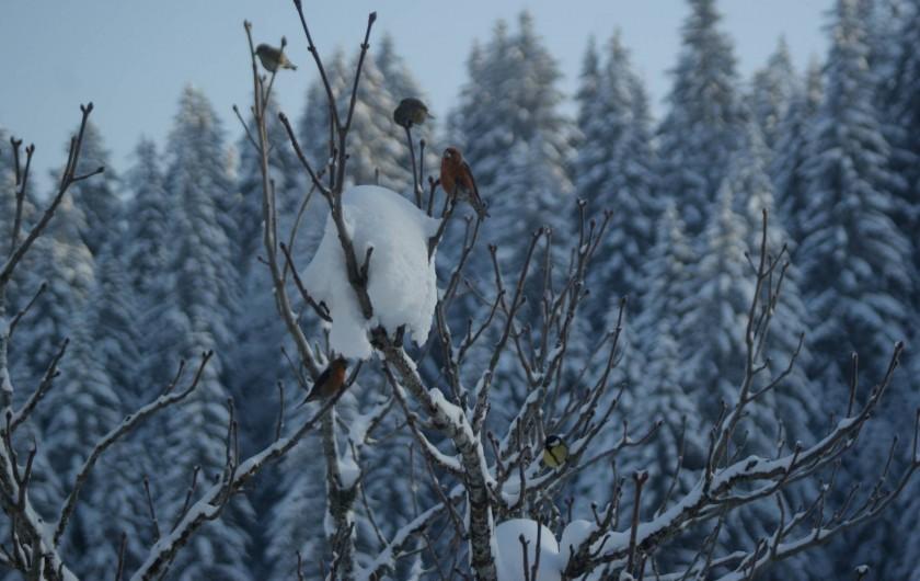 Location de vacances - Cabane dans les arbres à Bellecombe - De très beaux et divers  oiseaux.