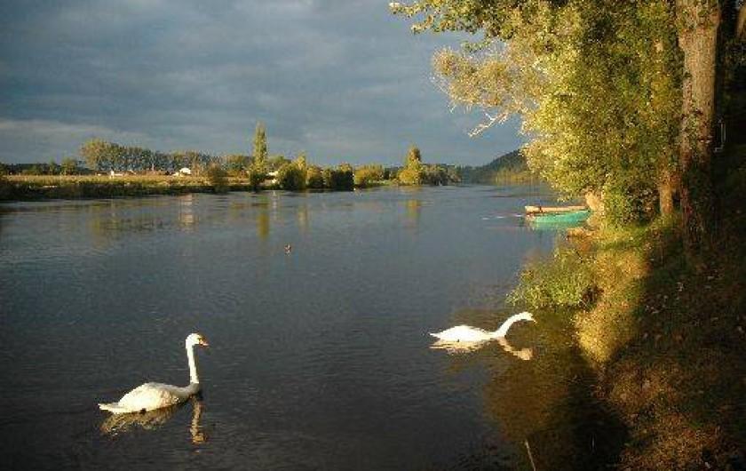Location de vacances - Gîte à Badefols-sur-Dordogne - Vie sauvage de la rivière