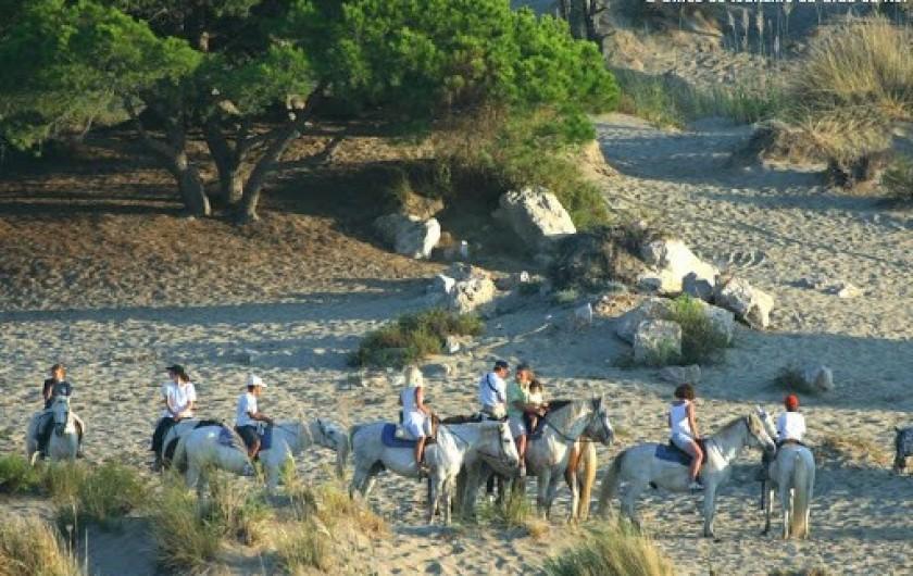 Location de vacances - Villa à Le Grau-du-Roi - Les balades à cheval en bord de mer
