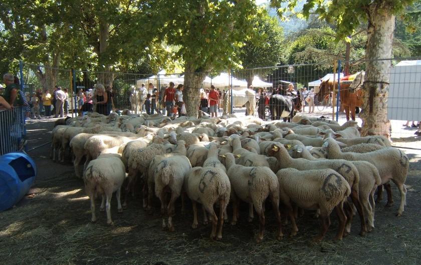 Location de vacances - Appartement à Sospel - Au village, fête agricole