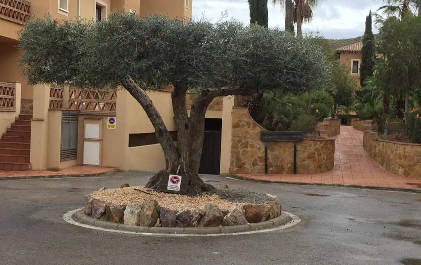 Location de vacances - Appartement à Vera - Parking privatif avec un magnifique olivier à l'entrée