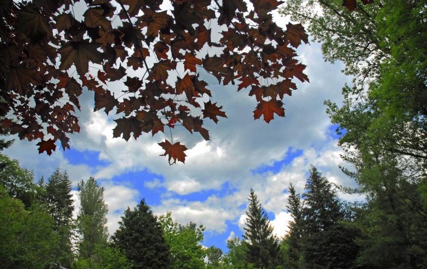 Location de vacances - Chambre d'hôtes à Saint-Laurent-de-Lévézou - Allongé sous les arbres