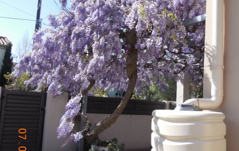 Location de vacances - Villa à Argelès Plage - porte d'entrée avec floraison de la glycine