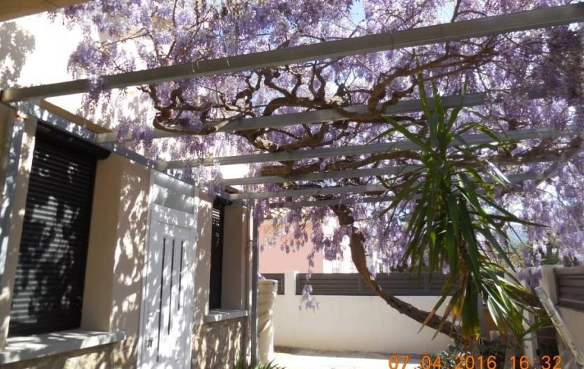 Location de vacances - Villa à Argelès Plage - Floraison magnifique et odorante de la glycine qq grappes ça et la tout l'étè