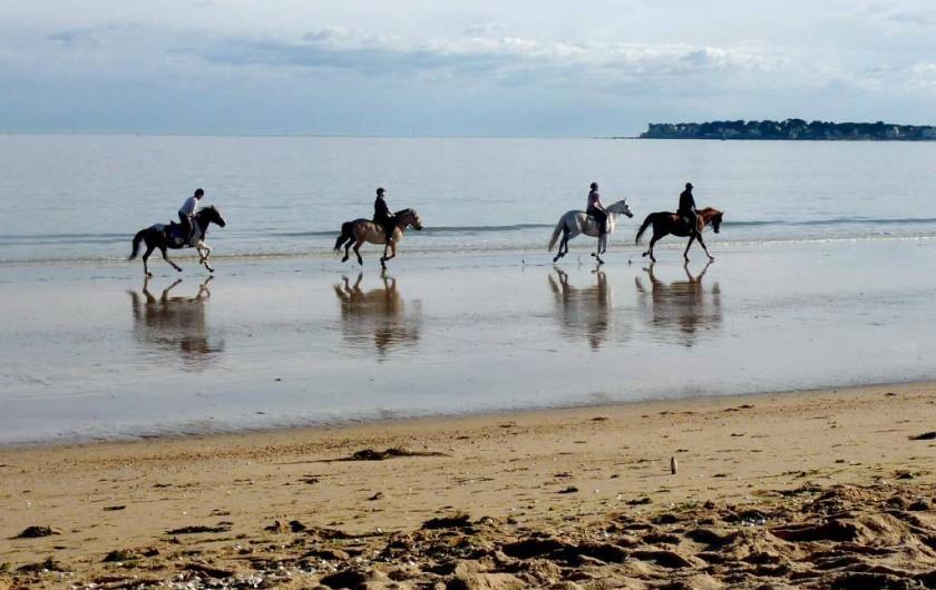 Location de vacances - Camping à Sorède - Randonnées et balades à cheval