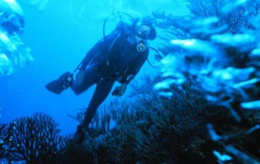 Location de vacances - Camping à Sorède - Plongée sous-marine