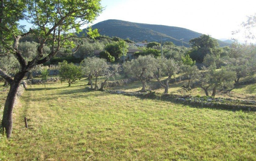 Location de vacances - Mas à Mons - vue dégagée sur les oliviers et les collines de l'arrière-pays