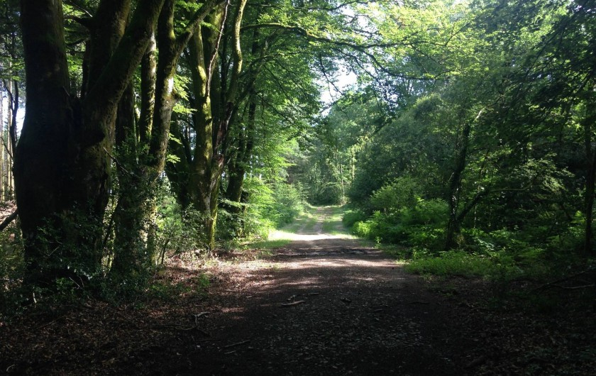 Location de vacances - Gîte à Saint-Hilaire-les-Courbes - Randonnez dans les bois ancienne.....