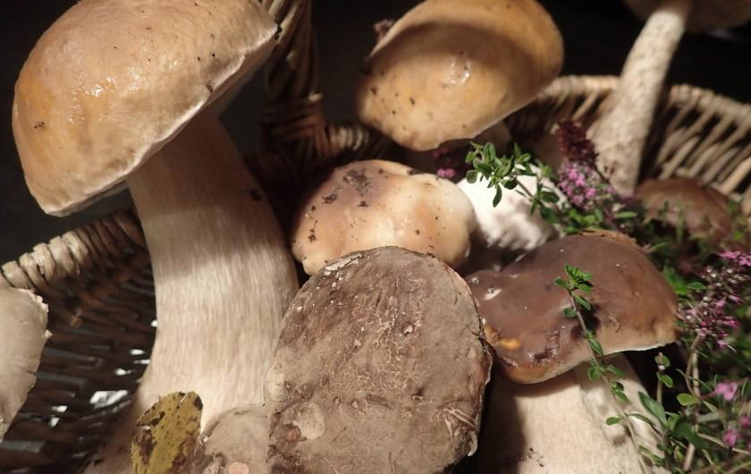 Location de vacances - Gîte à Saint-Hilaire-les-Courbes - Cherchez les champignons en automme...