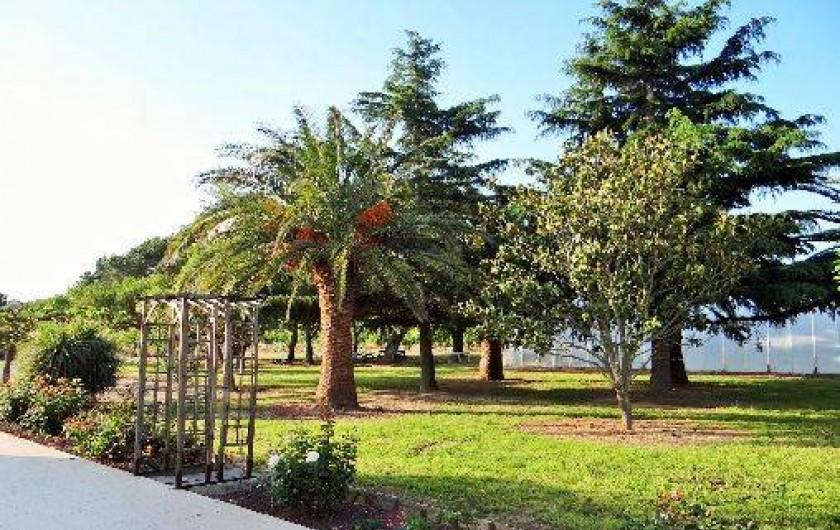 Location de vacances - Chambre d'hôtes à Ortaffa - Parc