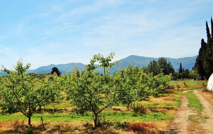 Location de vacances - Chambre d'hôtes à Ortaffa - Photos du verger d'abricotier